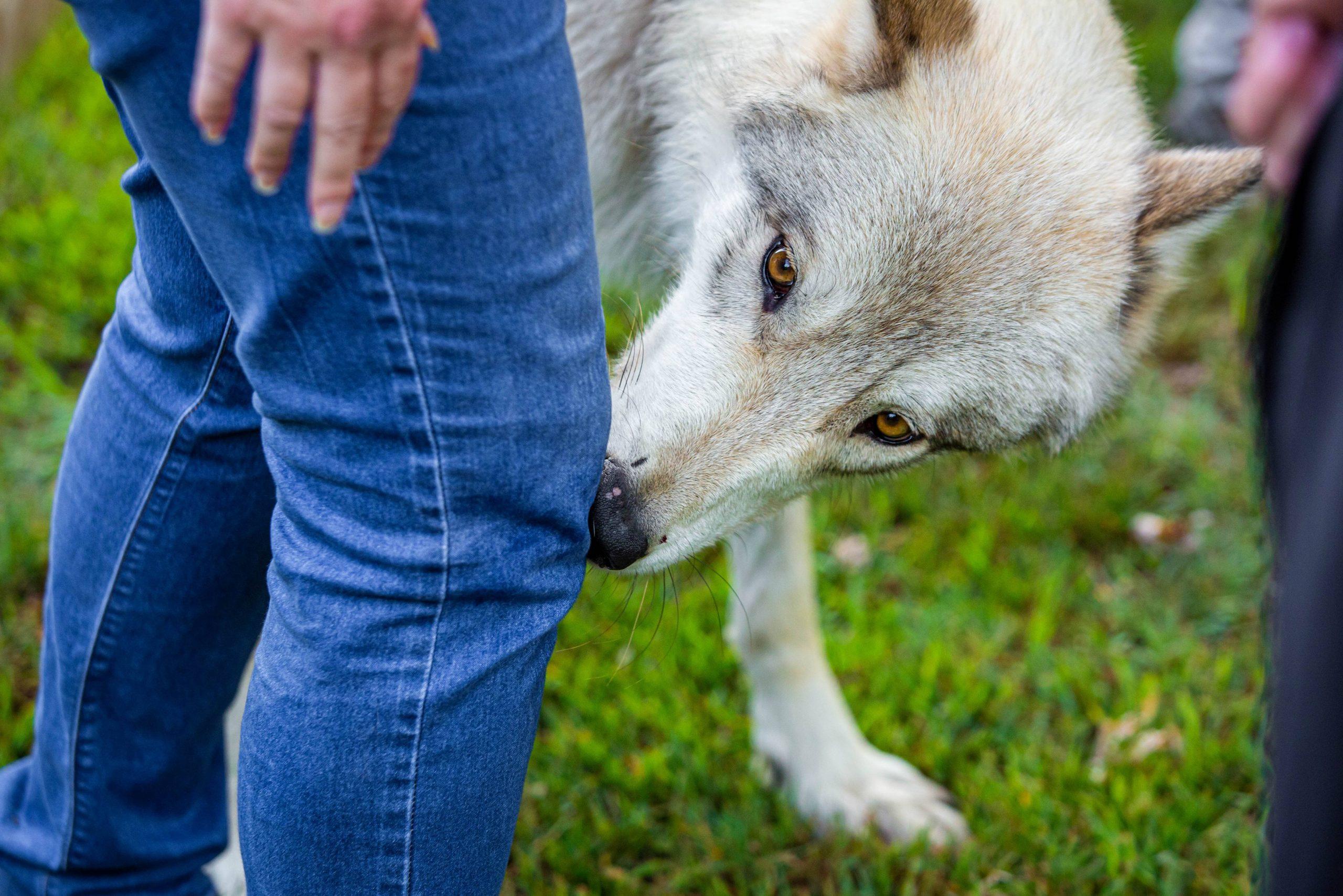 Dogs revolutionize disease detection